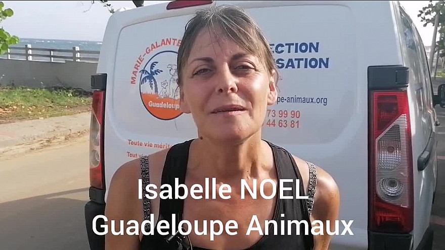 Des chiens créoles adoptés en France hexagonale.